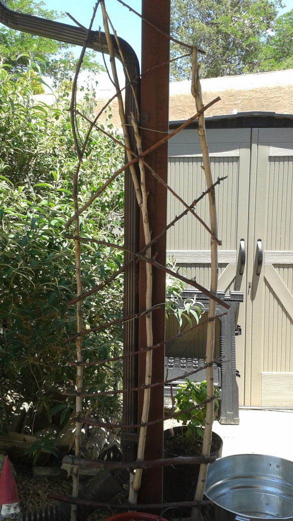 Trellis- Newly Completed