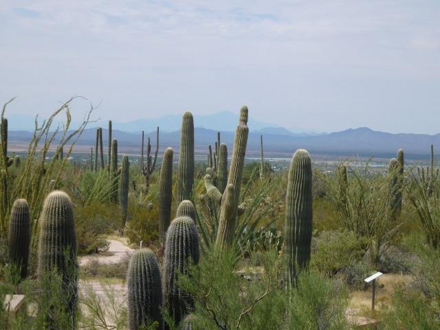 SaguaroWestView1