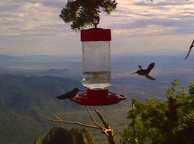 FlyingHummerSandiaFeeder2010